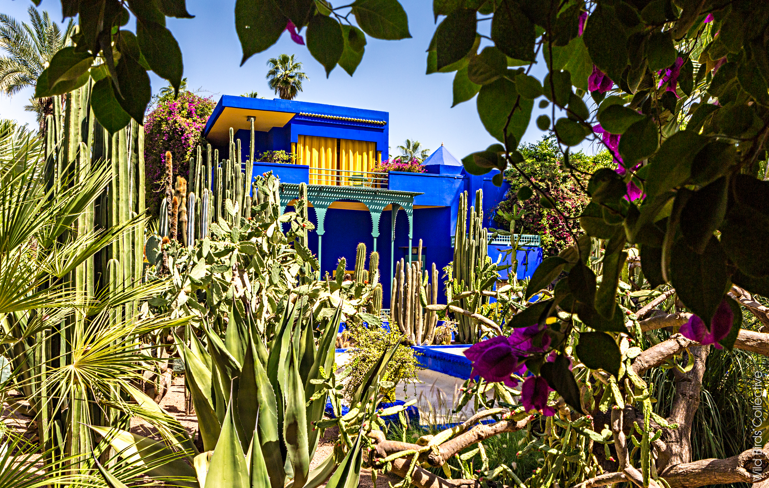 visiter le jardin majorelle marrakech wild birds collective. Black Bedroom Furniture Sets. Home Design Ideas