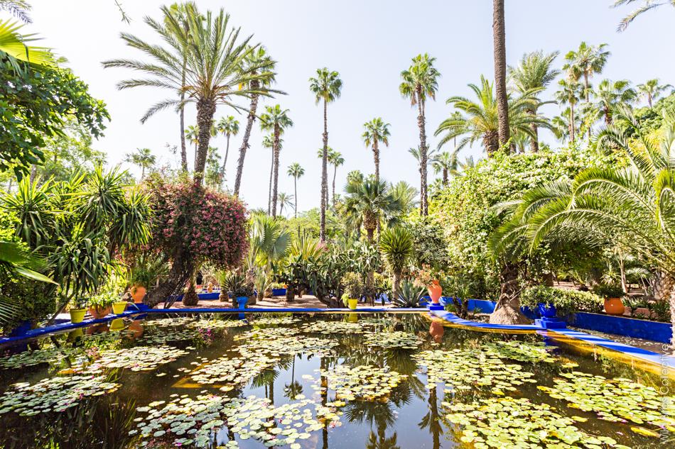 visiter le jardin majorelle marrakech wild birds collective. Black Bedroom Furniture Sets. Home Design Ideas