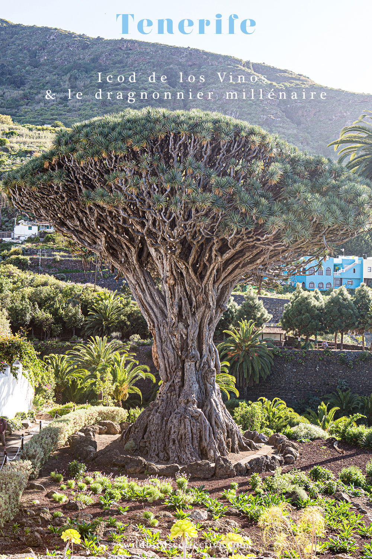 Voyage Ténérife îles Canaries
