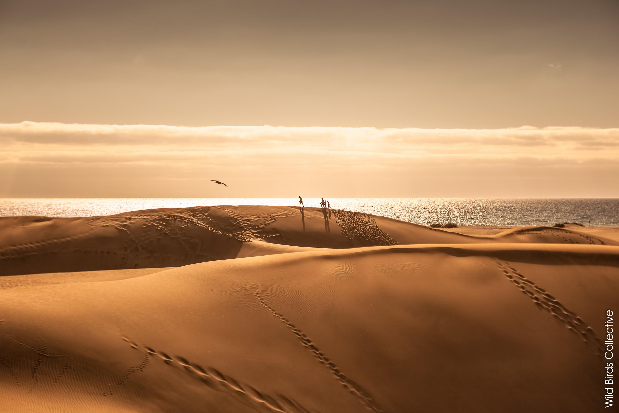 Dunes de Maspalomas à Gran Canaria