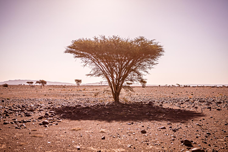 Arbre près de Saredrar au Maroc