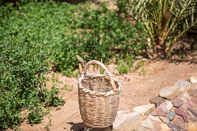 Oiseau à Saredrar au Maroc