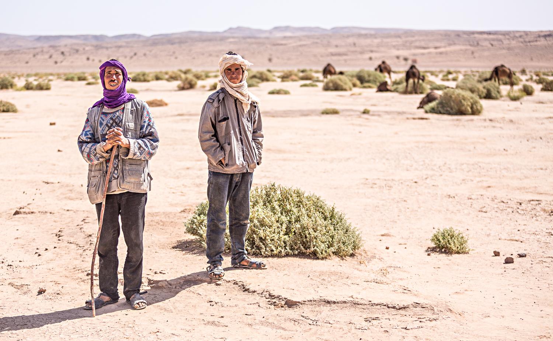 Eleveurs de dromadaires au Maroc