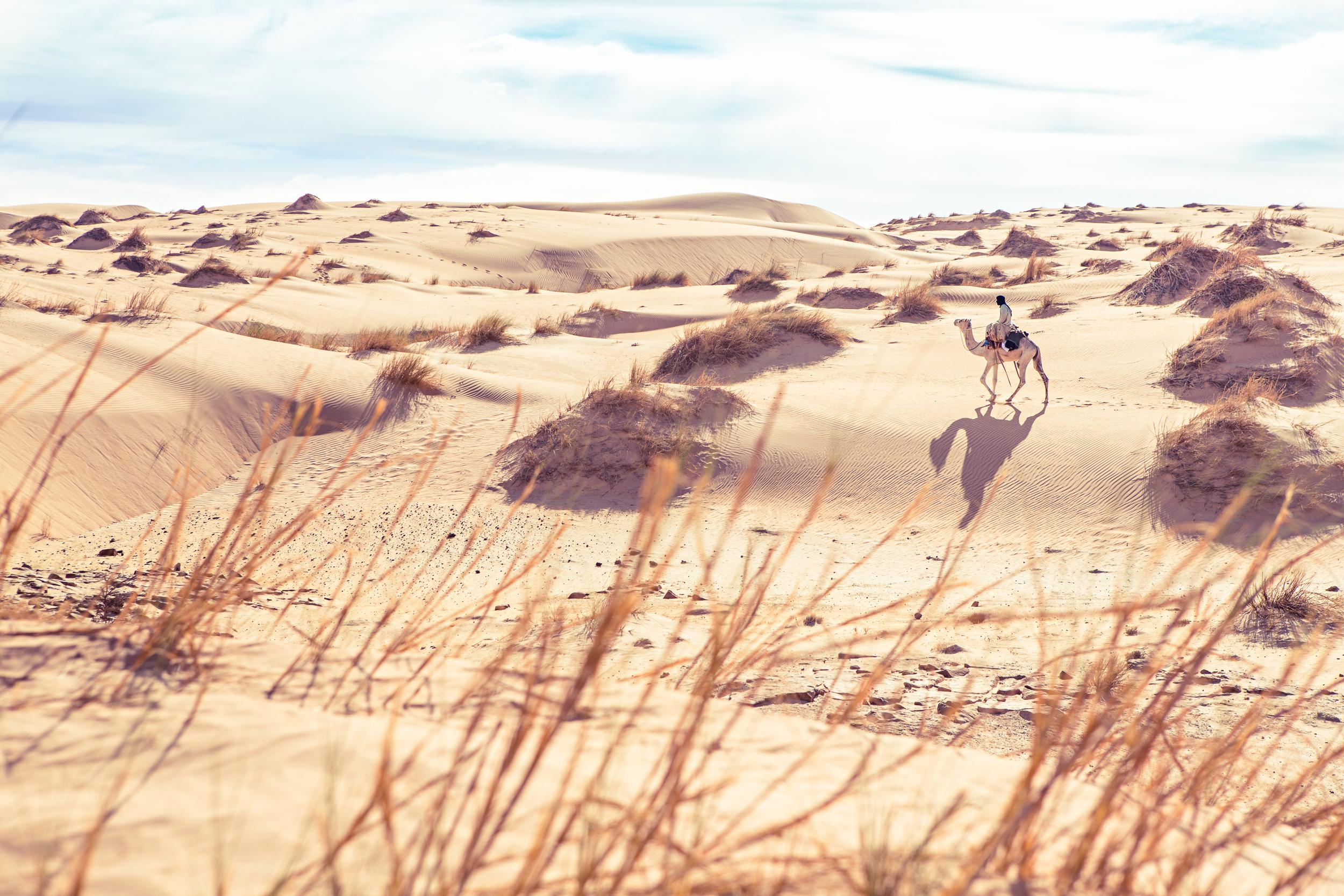 Nomade et dromadaire en Mauritanie