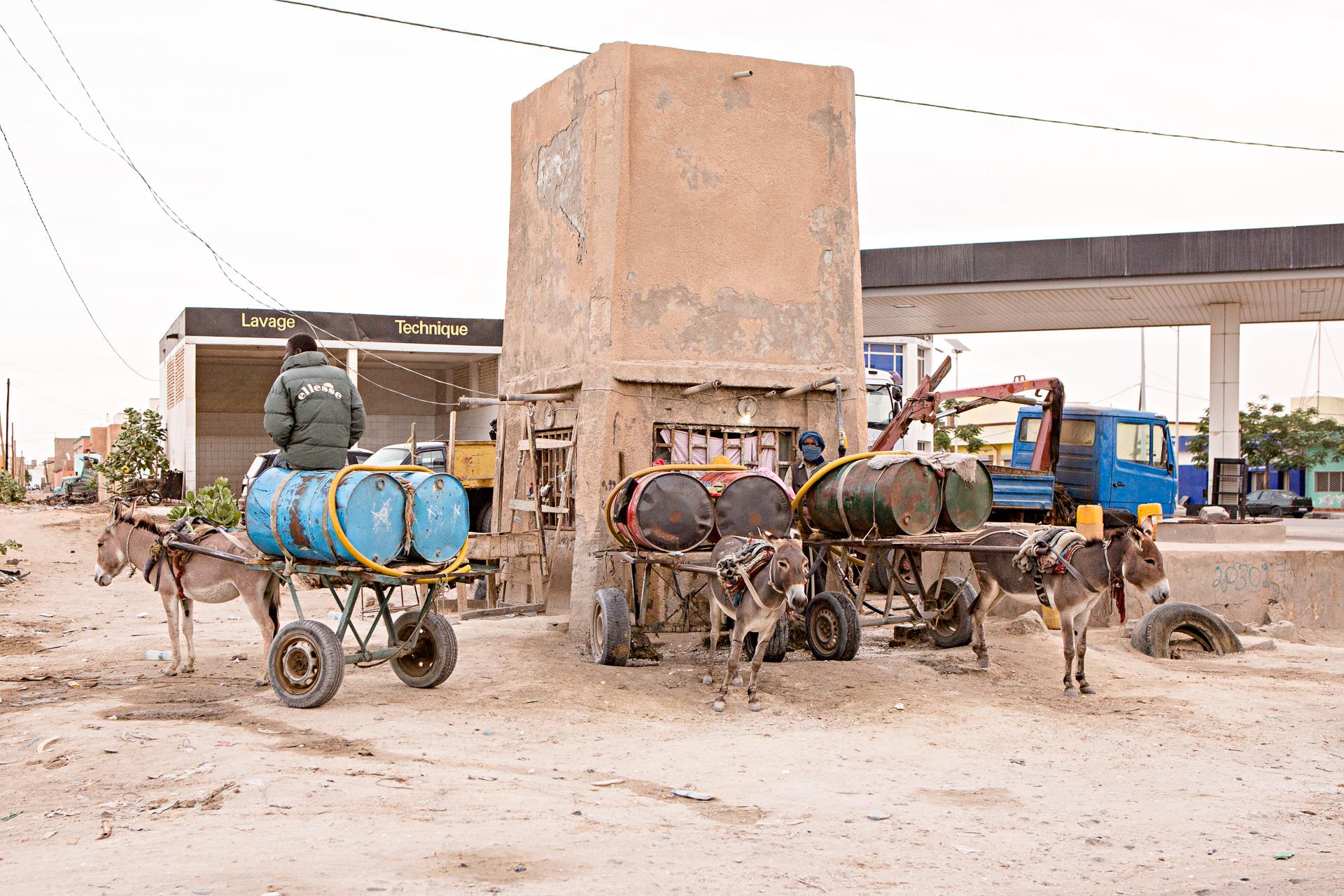 Charettes ânes Nouakchott Mauritanie