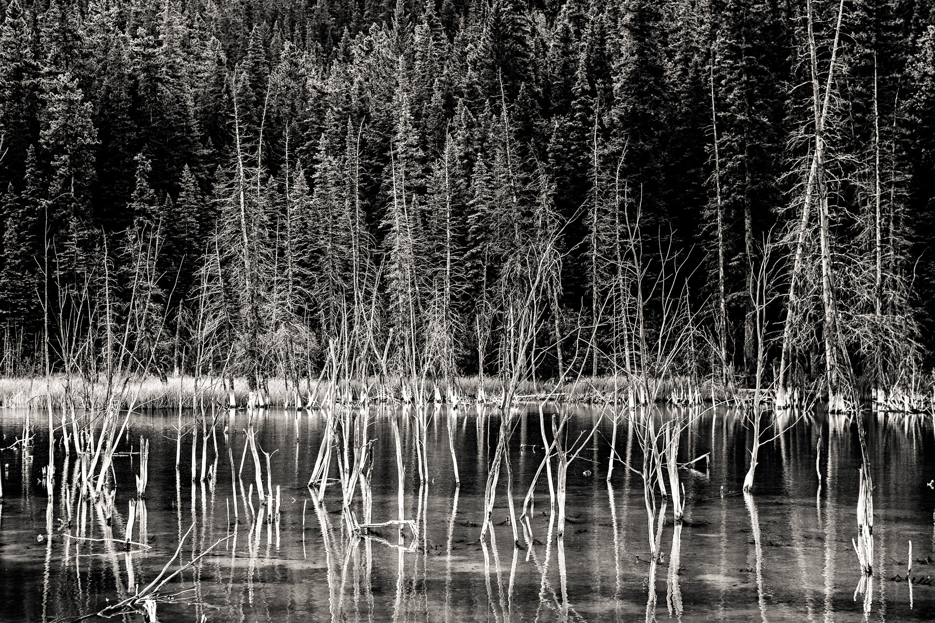 Edna Lake Jasper Alberta Canada