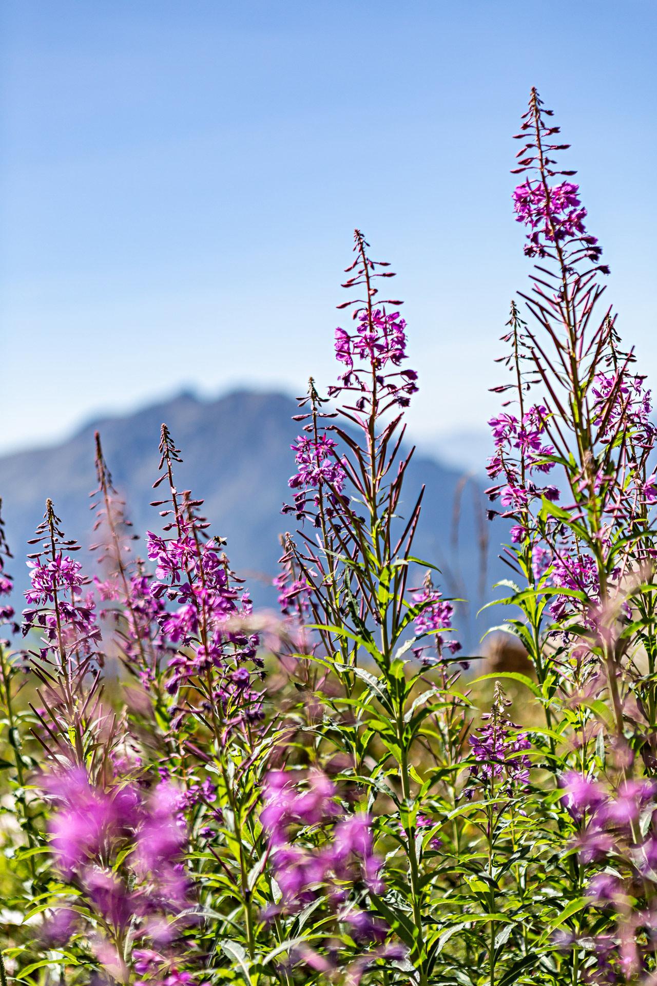 Randonnées autour de Grenoble dans les Alpes