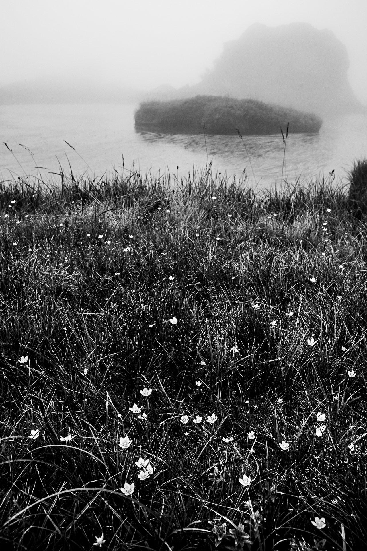 Lac et fleurs blanches du plateau Taillefer