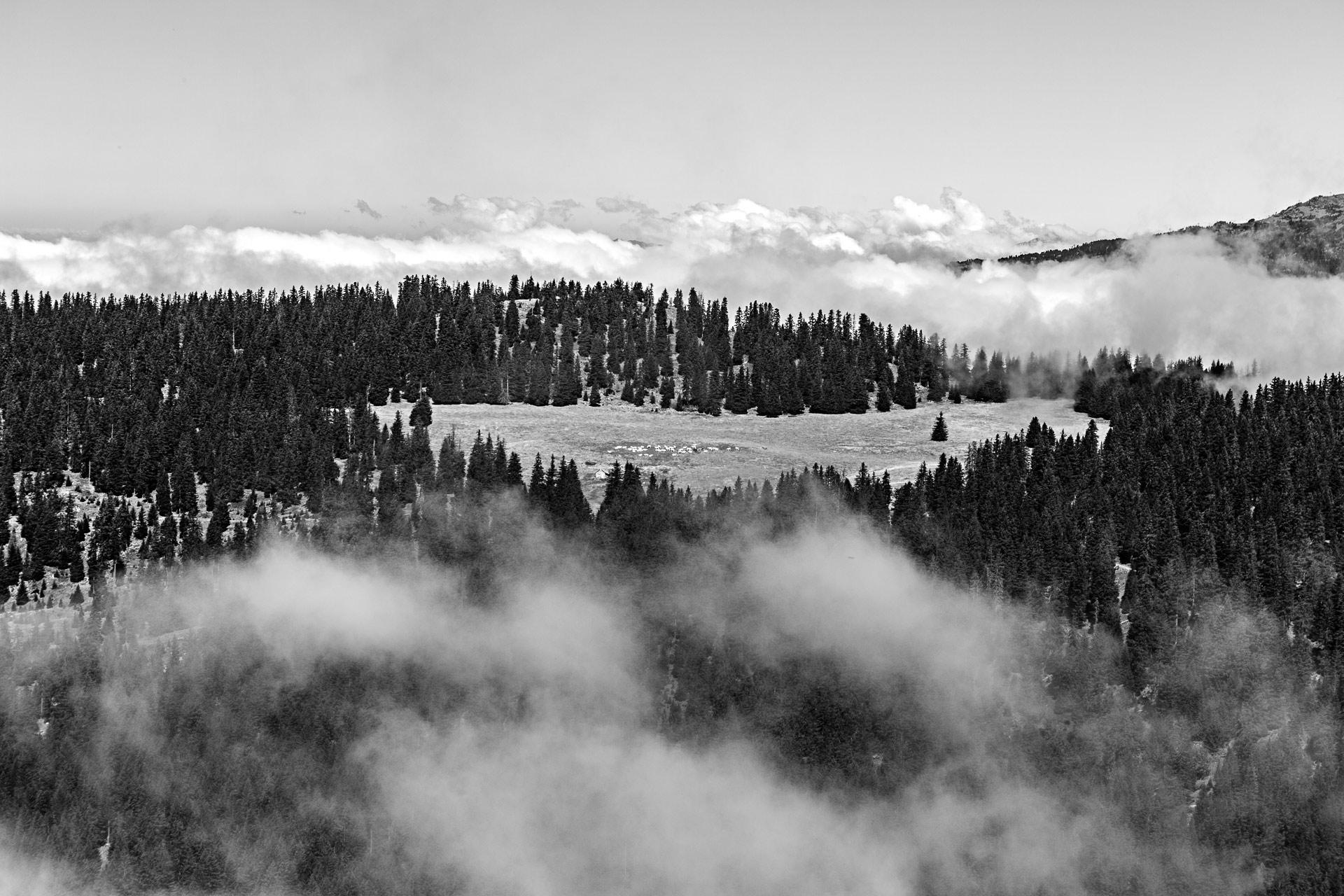 Pâturage et troupeau près de l'Alpe du Grand Serre