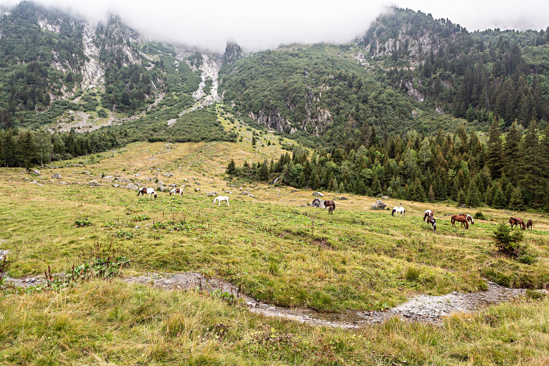 Chevaux près du lac du Poursollet