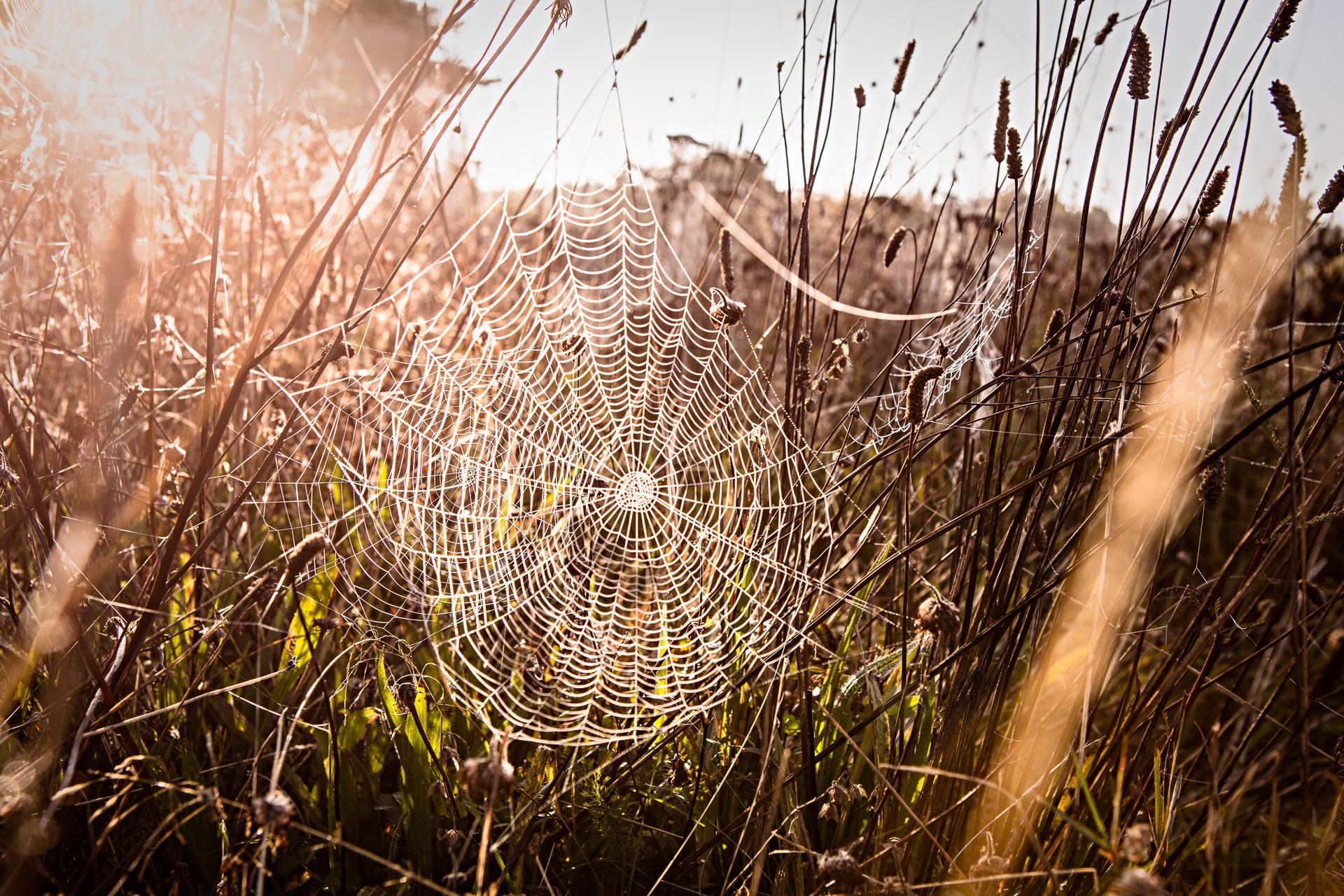 Toile araignée lac hôtel en Auvergne