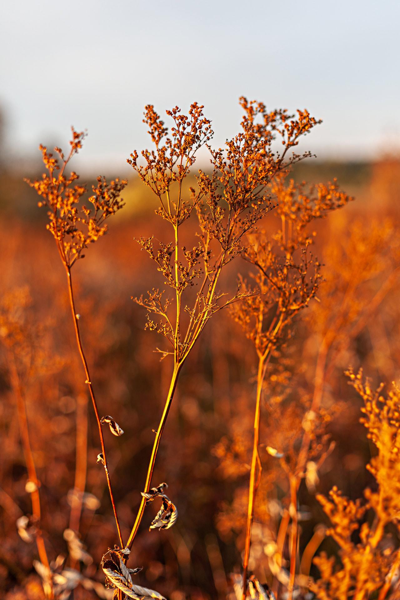 Végétation automne en Auvergne