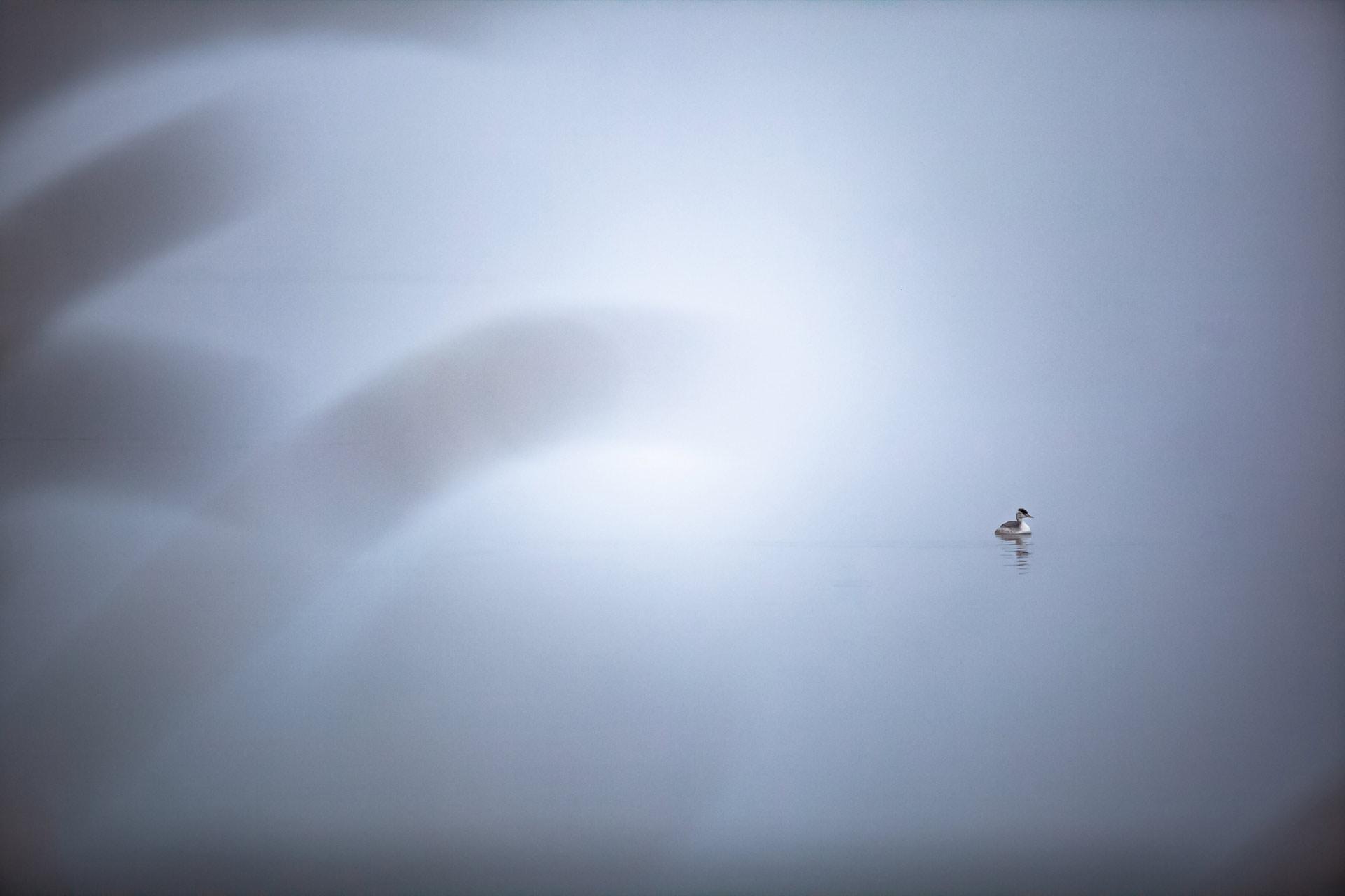 Gèrbe huppé lac Pêcher en Auvergne