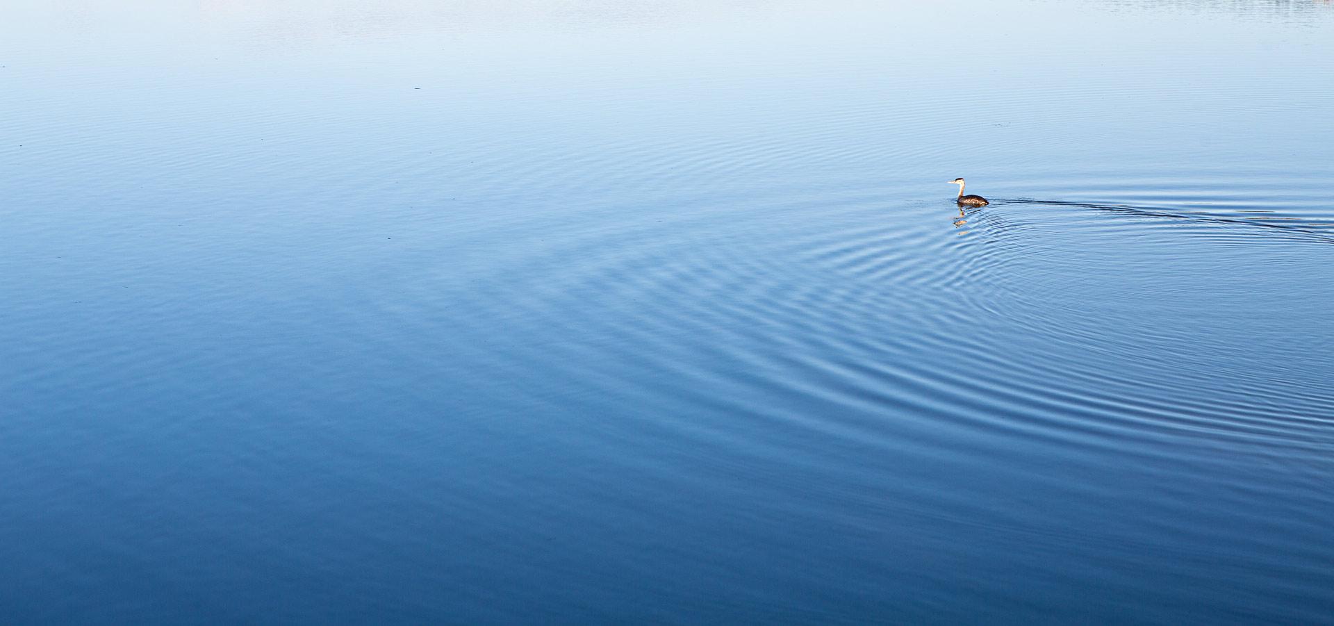 Gerbe huppé lac Pêcher en Auvergne