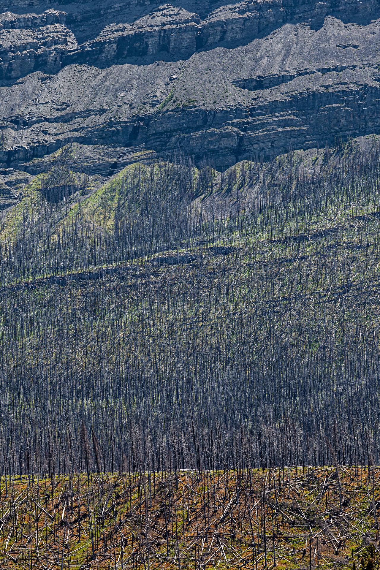 Feu de forêt promenade des Glaciers Canada