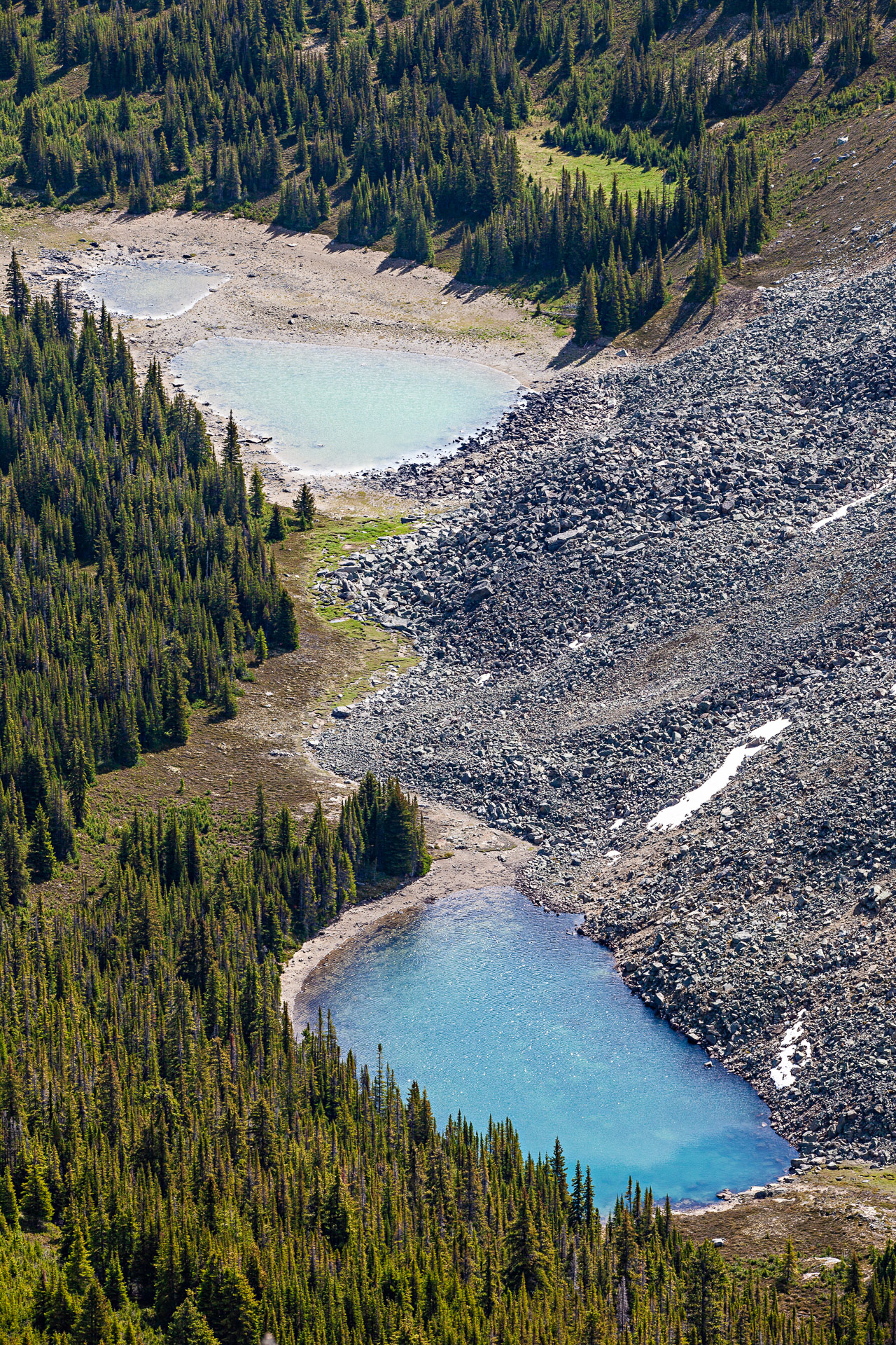 Bald Hills Trail Jasper Canada