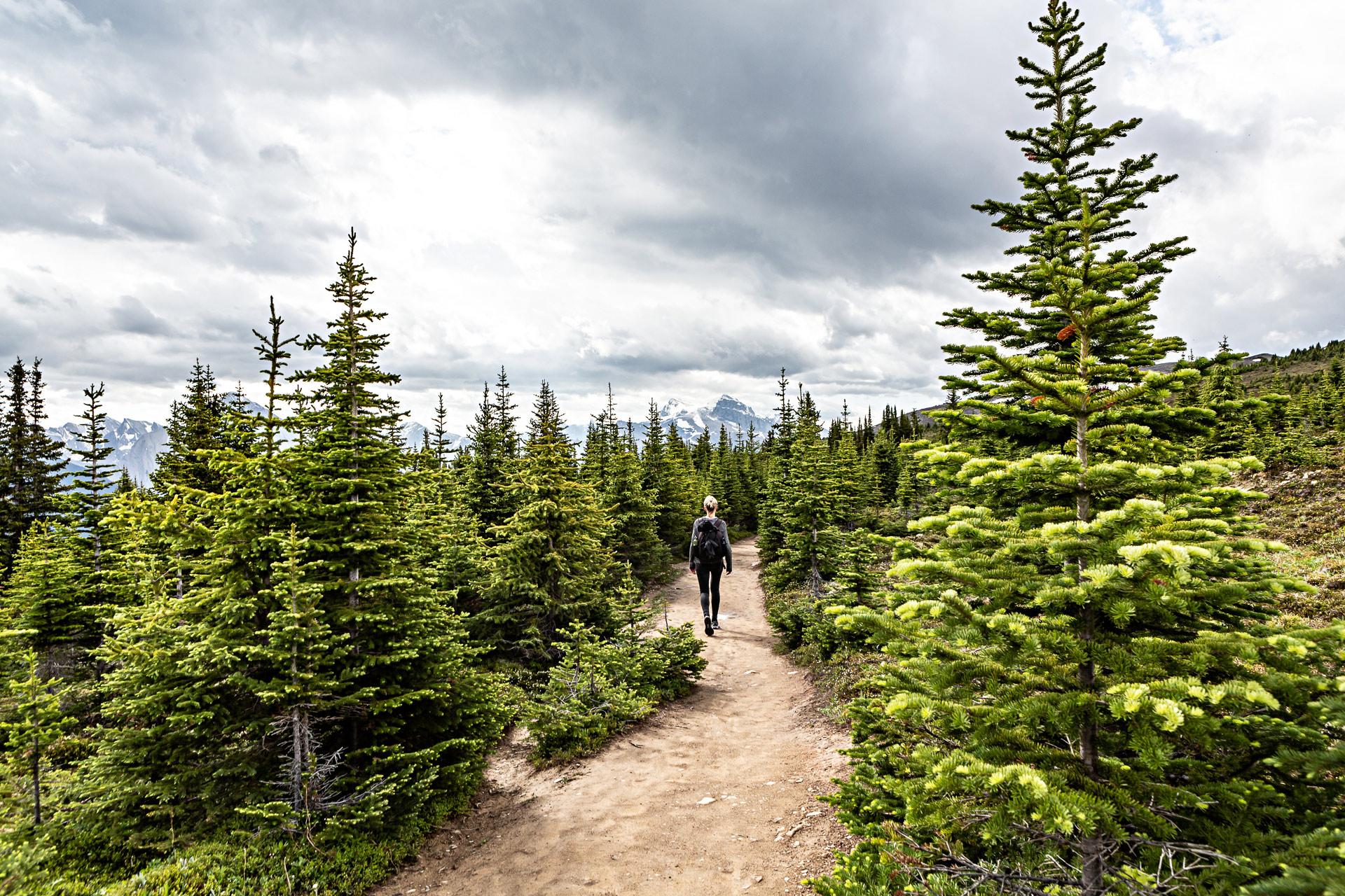 Bald Hills Trail Jasper Alberta Canada