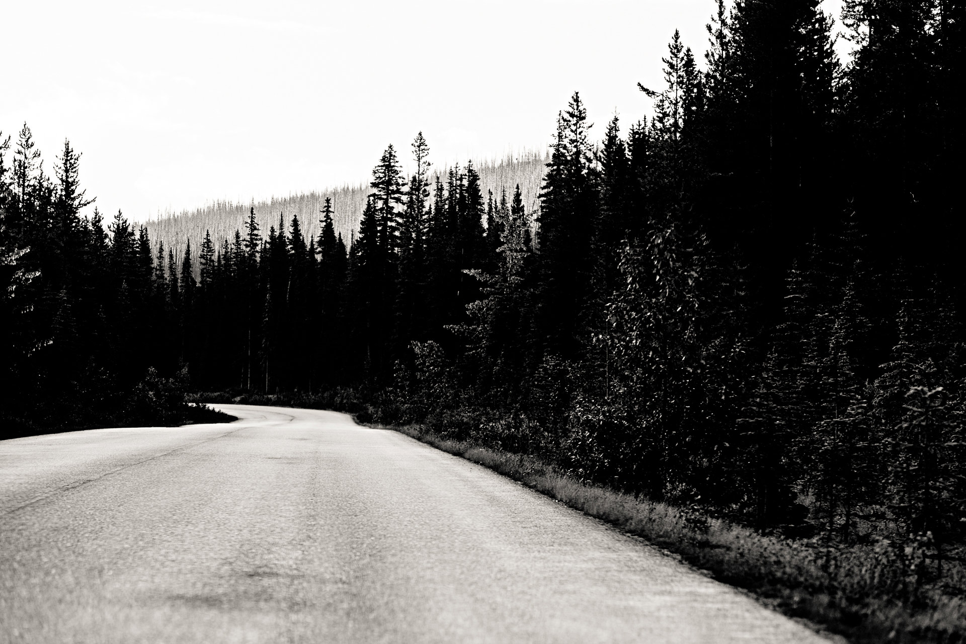 Maligne lake Road Jasper Canada Ouest