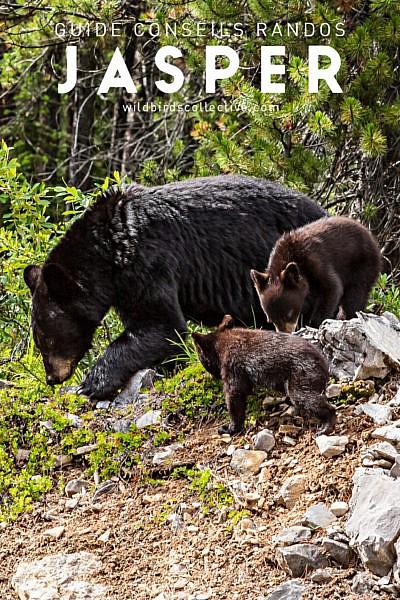 Ours noirs Maligne Lake Road Jasper
