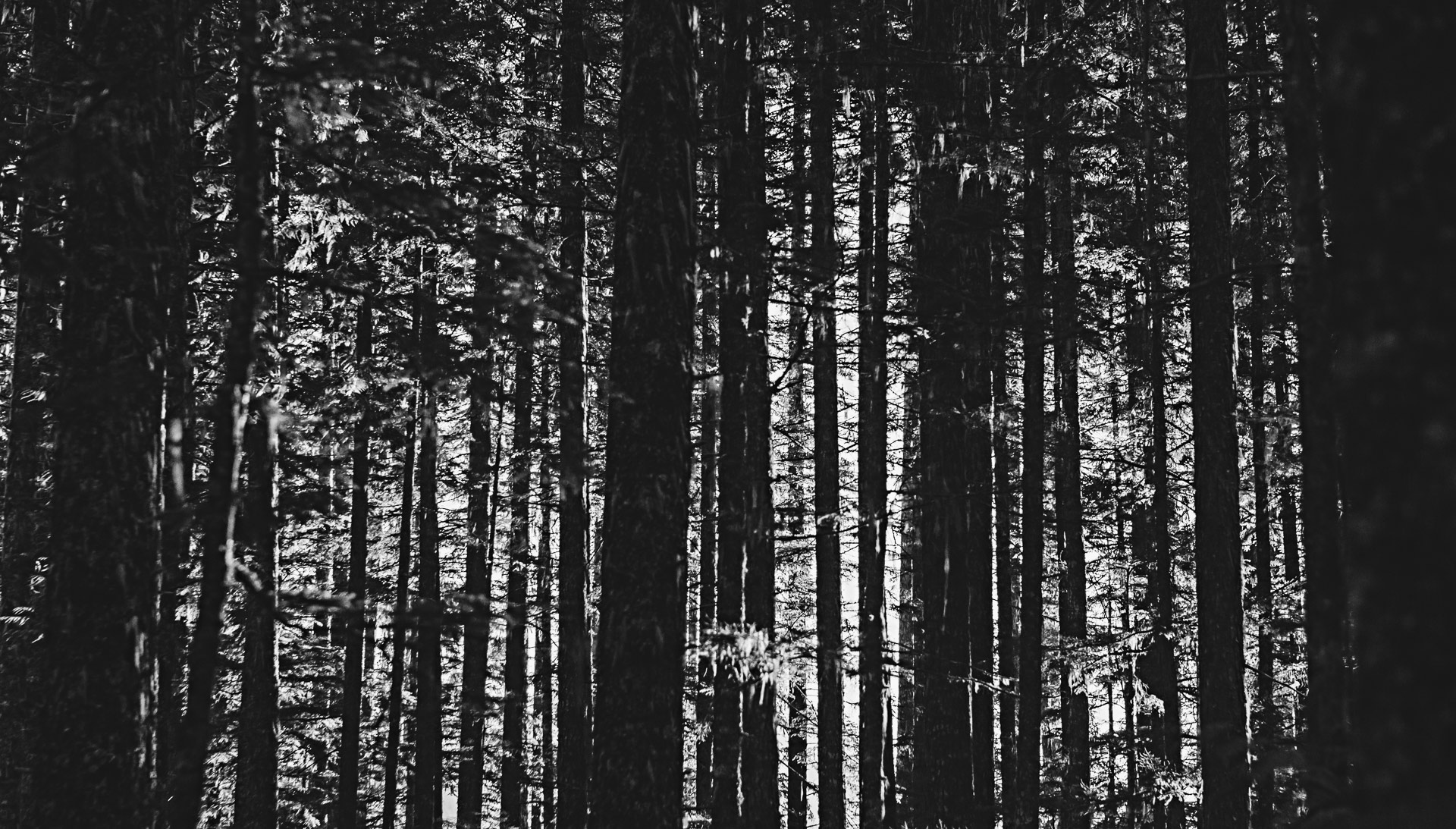 Forêt Whistler Colombie-Britannique Canada