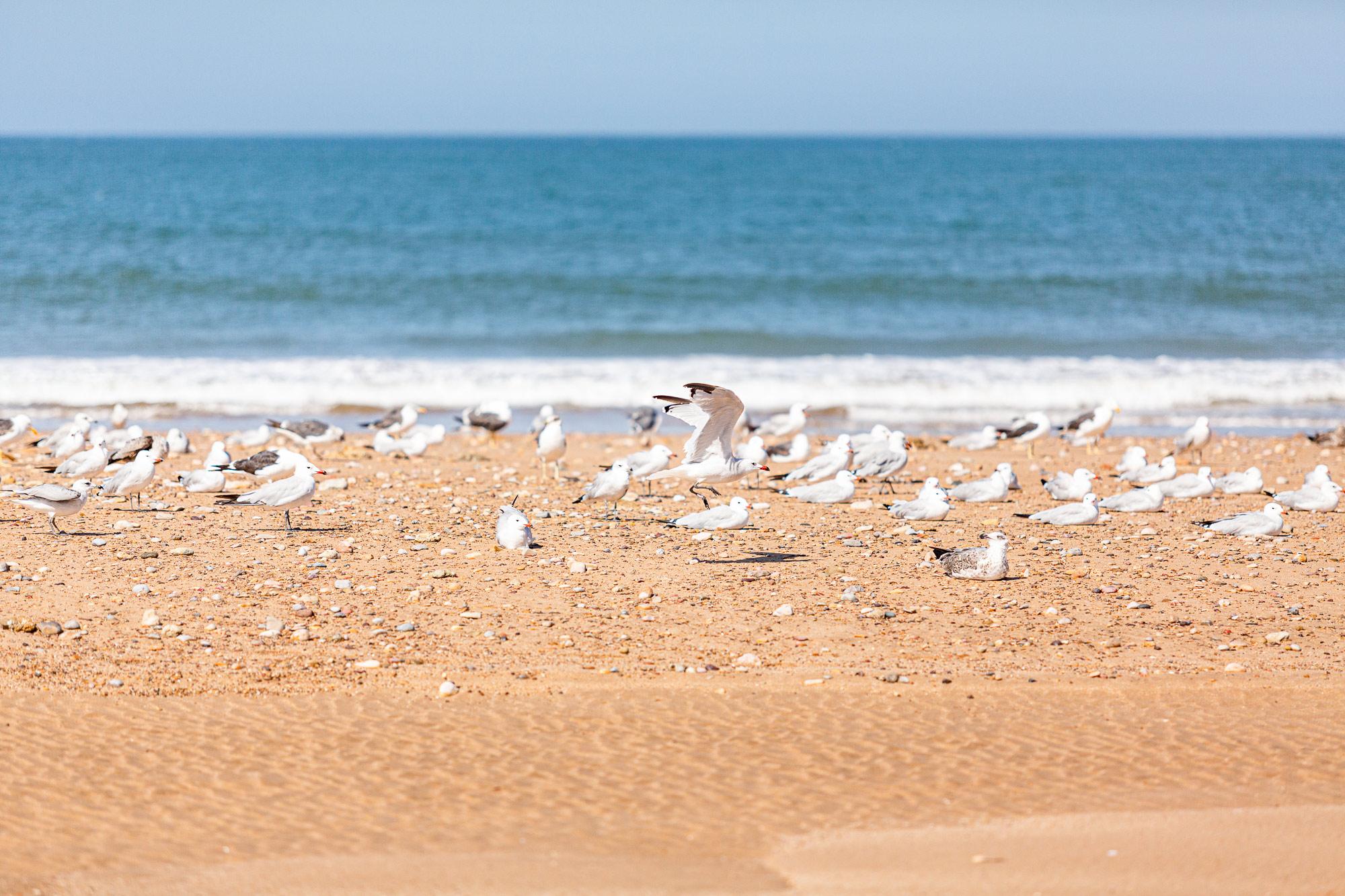 Trek au Maroc Agadir Essaouira oiseaux