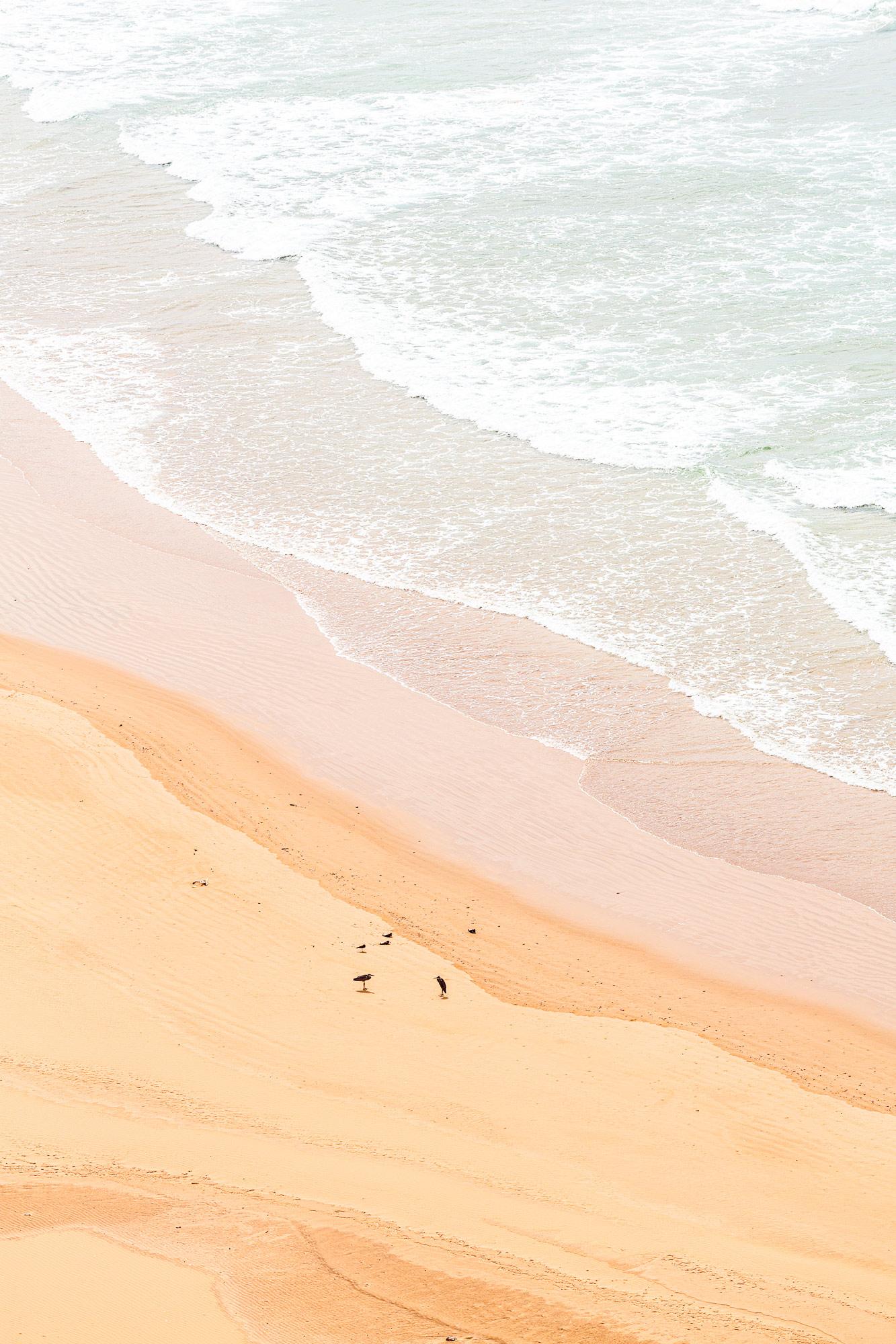 Trek au Maroc oiseaux sur la plage