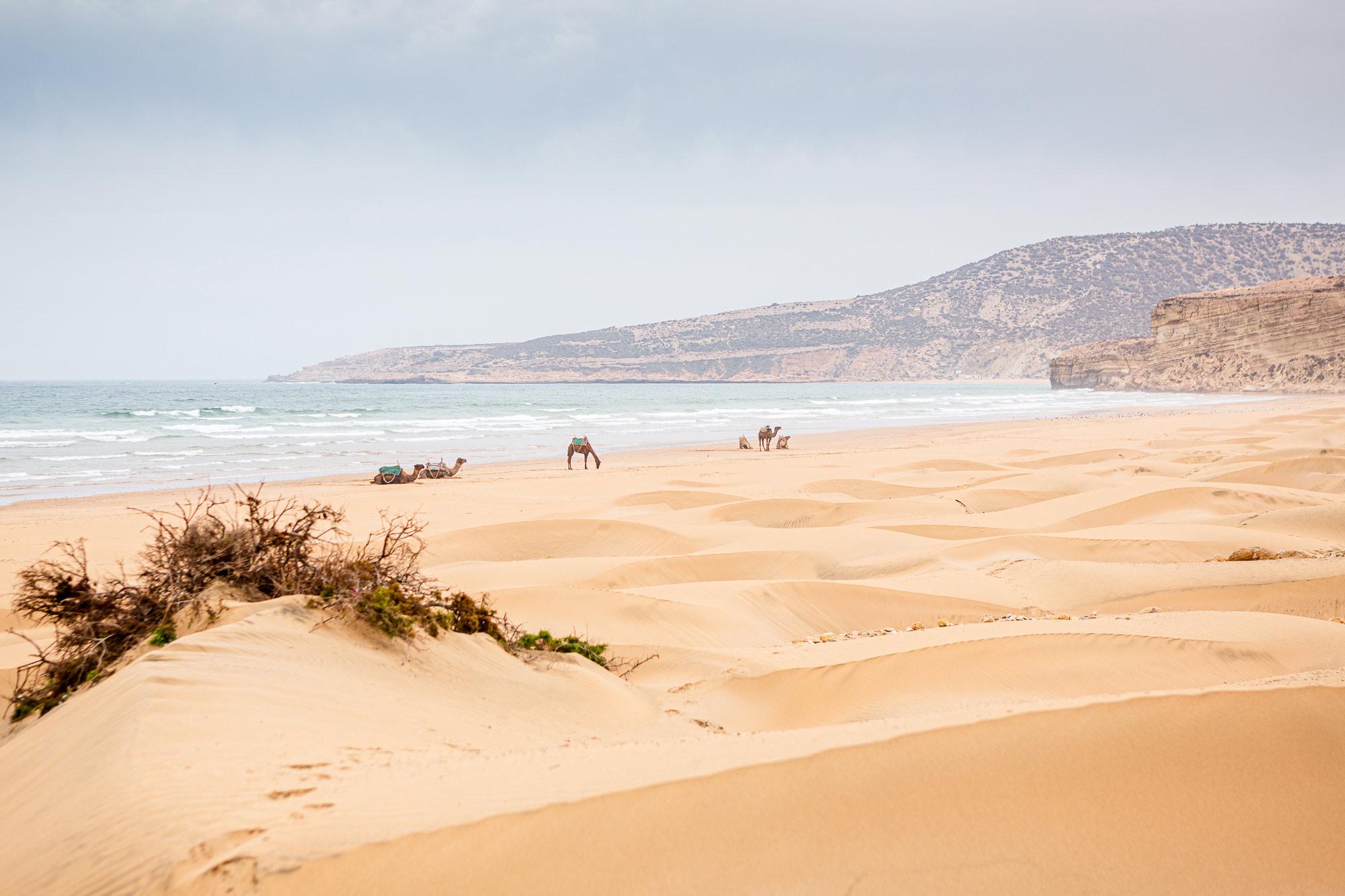 Trek au Maroc dromadaires Sidi Ahmed Assayh