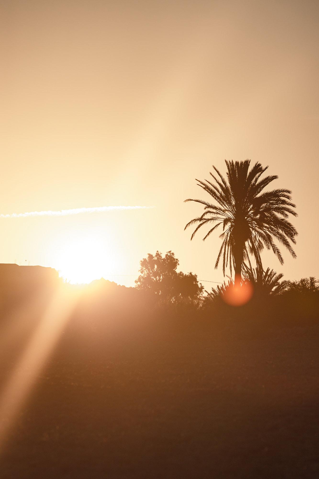 Trek au Maroc Agadir Essaouira palmier
