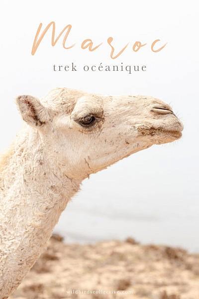 Trek océanique au Maroc Agadir Essaouira