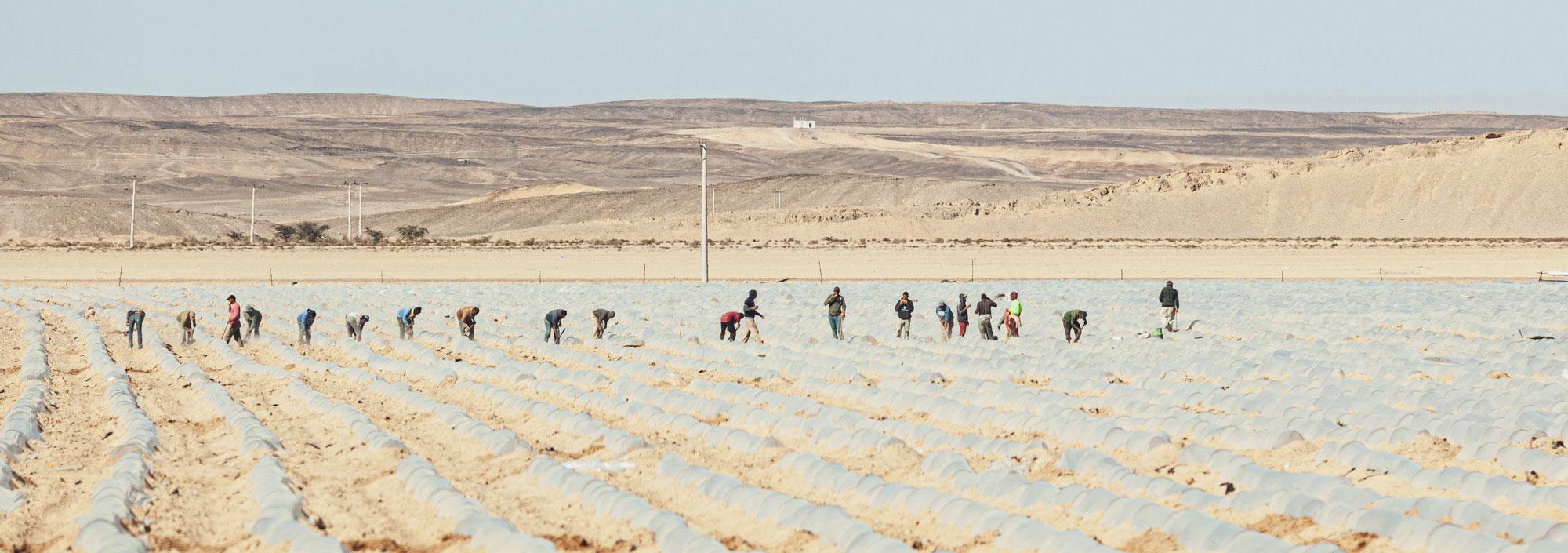 voyage en Jordanie Wadi Araba cultures
