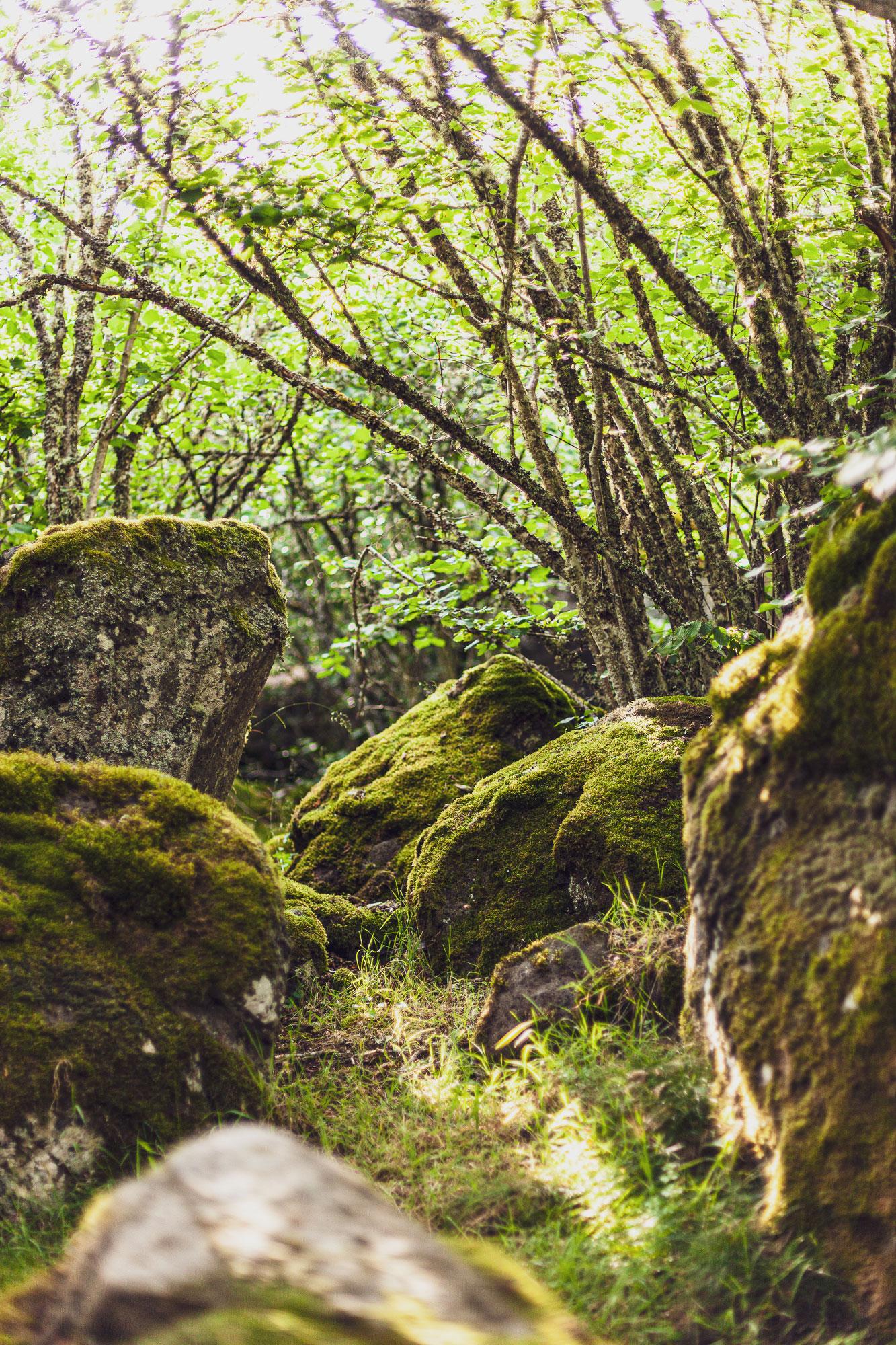 séjour luxe et bien-être en Auvergne